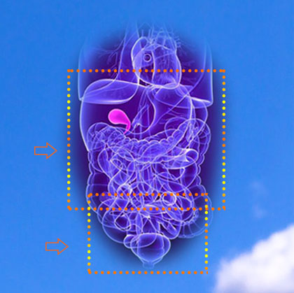Акция на МРТ брюшной полости